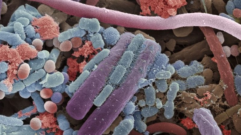 Why Don't Bacteria Get Bigger or Smaller?
